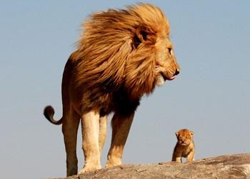 Фото ребенка со львом