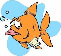 bolezni-ryb-ryby-patsient